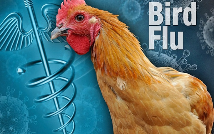 Bird Flu, avian influenza, causes of birdflu, symptoms of birdflu, birdflu risks